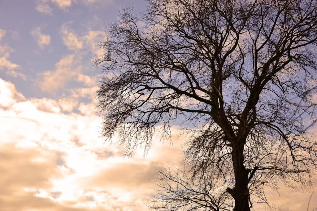 Gouttes d'inspiration #1 - L'hiver et la nature