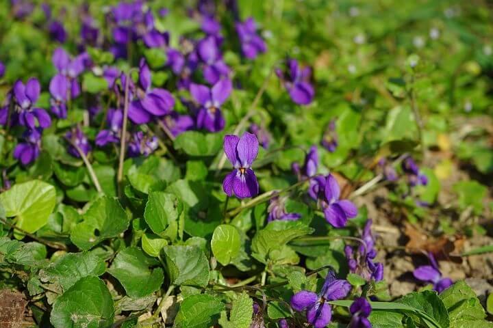 Gouttes d'inspiration #3 - Les discrètes violettes et les artisans du lien social