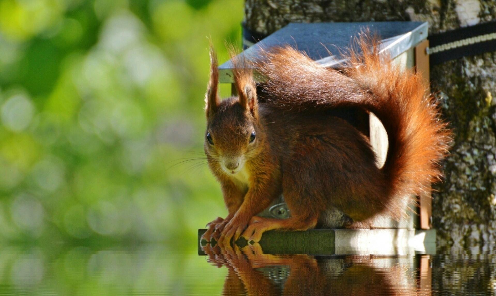 Goutte d'inspiration 14 - L'écureuil, les noisettes et le flow