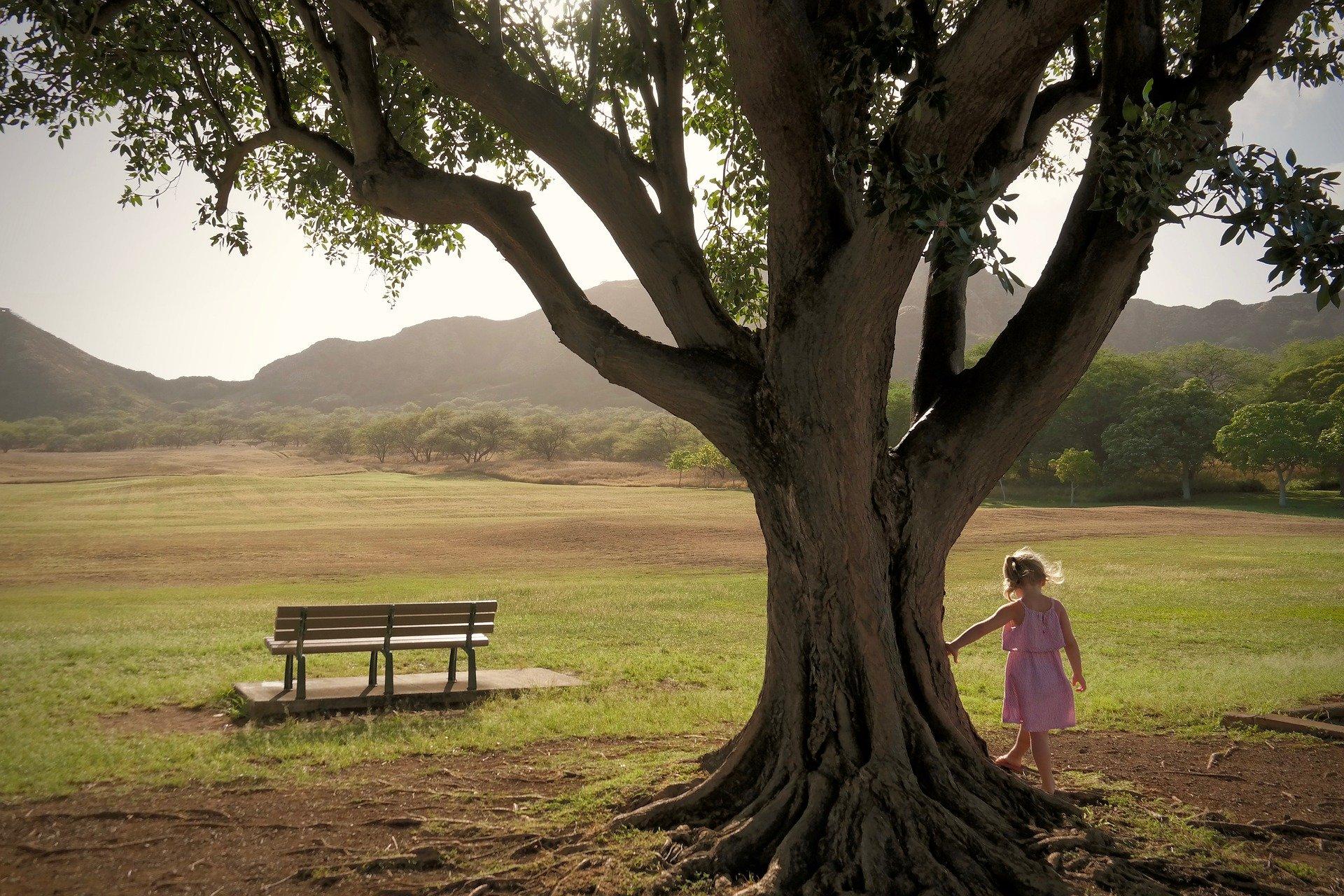 Goutte d'inspiration 19 - Auprès de nos arbres