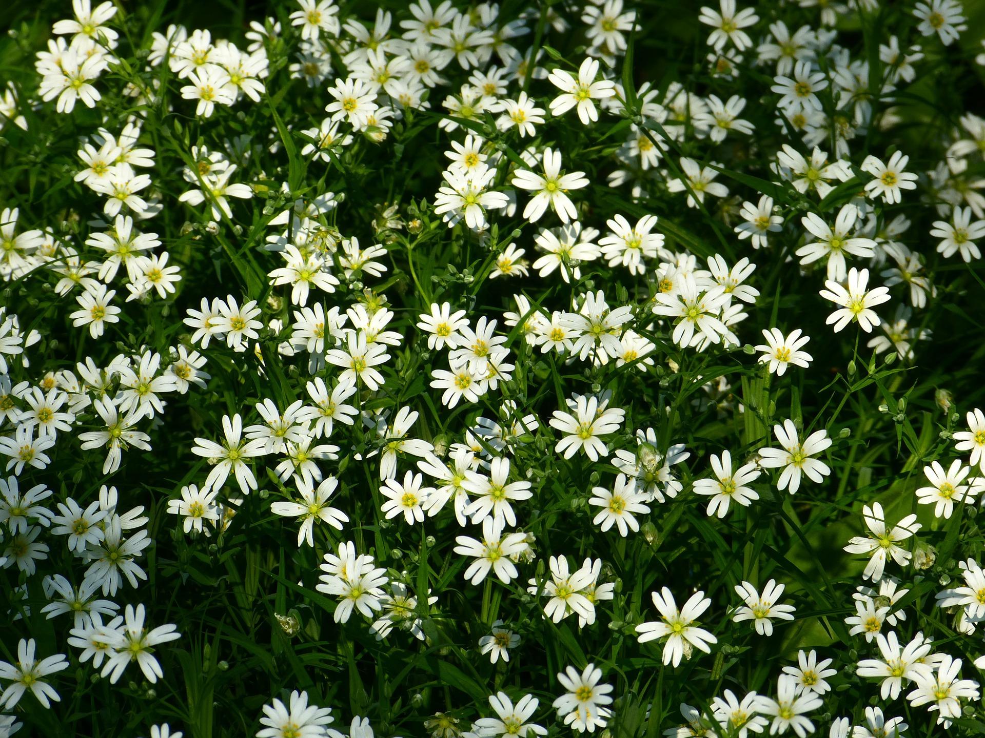 Goutte 18 - De la cécité à la gratitude botanique